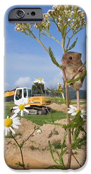 Backhoe iPhone Cases - Harvest Mouse And Backhoe iPhone Case by Jean-Louis Klein & Marie-Luce Hubert