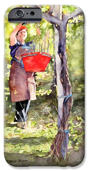 Harvest iPhone Cases - Harvesting Annas Grapes iPhone Case by Bonnie Rinier