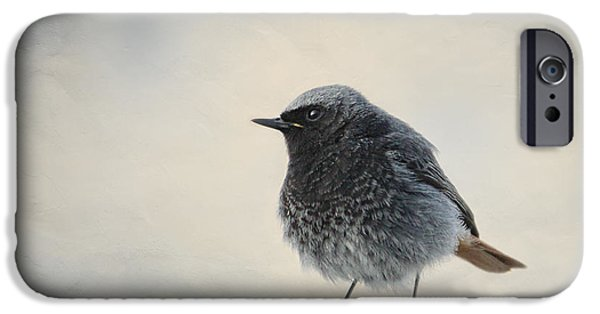 Animal Picture iPhone Cases - Hausrotschwaenzchen iPhone Case by Heike Hultsch
