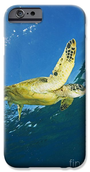 Animal Wisdom iPhone Cases - Hawaii, Green Sea Turtle iPhone Case by Ron Dahlquist - Printscapes