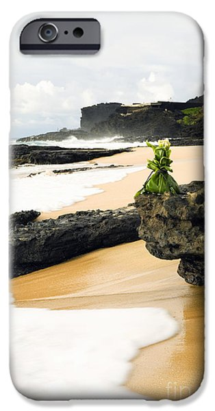 Hawaiian Food iPhone Cases - Hawaiian Offering on Beach iPhone Case by Dana Edmunds - Printscapes