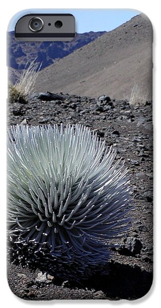 Craters iPhone Cases - Hawaiian Silversword Plant iPhone Case by Dustin K Ryan