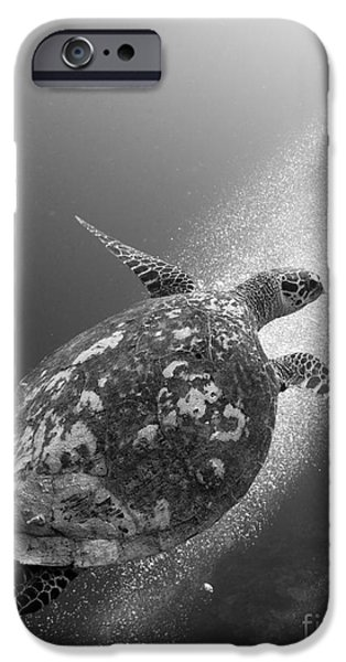 Undersea Photography iPhone Cases - Hawksbill Turtle Ascending iPhone Case by Steve Jones