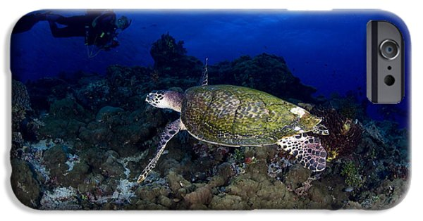 Undersea Photography iPhone Cases - Hawksbill Turtle Swimming With Diver iPhone Case by Steve Jones