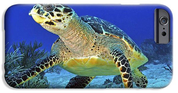 Undersea Photography iPhone Cases - Hawskbill Turtle On Caribbean Reef iPhone Case by Karen Doody