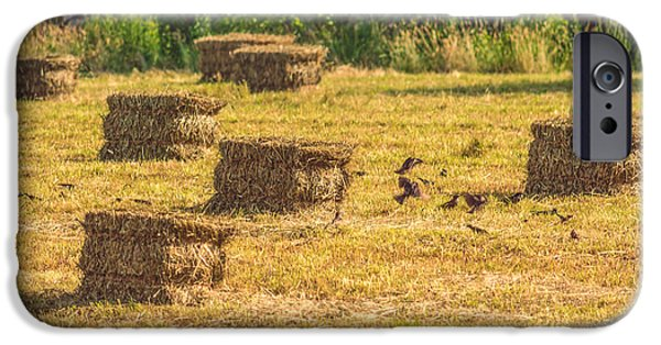 Birds iPhone Cases - Hay Bales with Birds Fluttering iPhone Case by Black Brook Photography