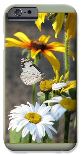 Pines iPhone Cases - He Loves Me He Loves Me Not iPhone Case by Brooks Garten Hauschild