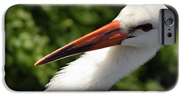 Sea Birds iPhone Cases - Head Above iPhone Case by Bill Hayes