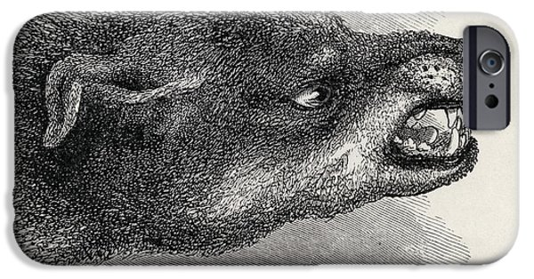 Animal Drawings iPhone Cases - Head Of Snarling Dog. Illustration iPhone Case by Ken Welsh