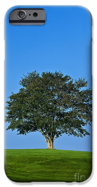 Business Photographs iPhone Cases - Healthy Tree iPhone Case by John Greim