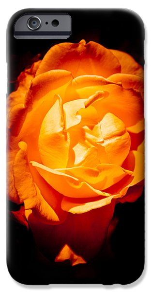 Gold Roses iPhone Cases - Heart of Gold iPhone Case by Loriental Photography