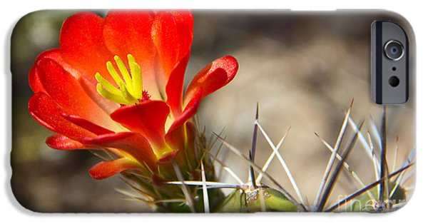 Mounds iPhone Cases - Hedgehog Cactus Flower iPhone Case by Kelly Holm