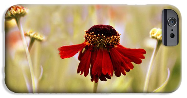 Daisy Bud iPhone Cases - Helenium Dance iPhone Case by Jessica Jenney