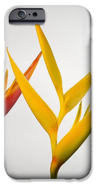 Heliconia iPhone Case by Tomas del Amo - Printscapes