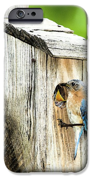 Baby Bird Digital iPhone Cases - Hello Baby iPhone Case by Betty LaRue