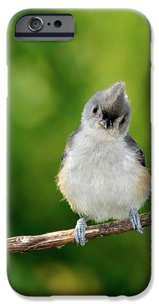 Baby Bird iPhone Cases - Hello World iPhone Case by Betty LaRue
