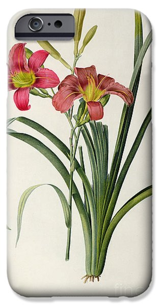 Botanical Paintings iPhone Cases - Hemerocallis fulva iPhone Case by Pierre Joseph Redoute
