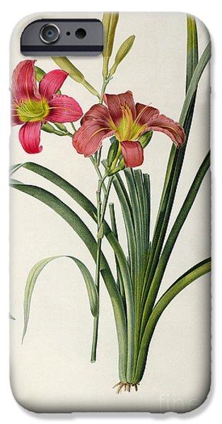 Horticulture iPhone Cases - Hemerocallis fulva iPhone Case by Pierre Joseph Redoute