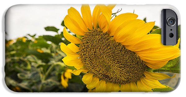 Plant iPhone Cases - Here Comes the Sun ... flower iPhone Case by Liran Eisenberg