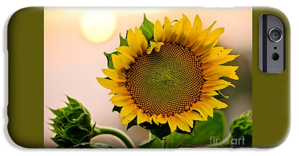 Bloosom iPhone Cases - Here Comes The Sun iPhone Case by Nick  Boren