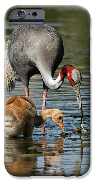Baby Bird iPhone Cases - Here is How You Do It iPhone Case by Dawn Currie