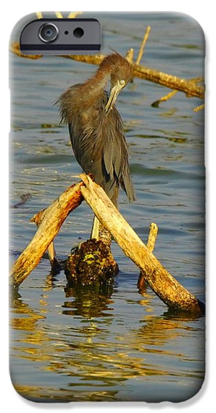 Slider Photographs iPhone Cases - Heron And Turtle iPhone Case by Robert Frederick