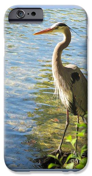 Angel Blues iPhone Cases - Heron Habitat iPhone Case by Sharon Nelson-Bianco