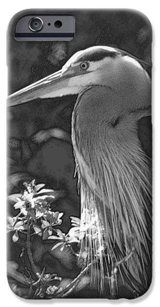 Birds iPhone Cases - Heron iPhone Case by Lori Seaman