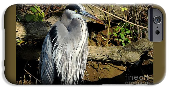 Fall iPhone Cases - Heron Of An Autumn Morn iPhone Case by Tami Quigley