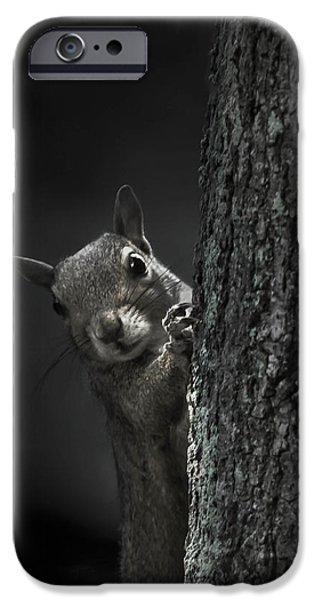 Gray Hair iPhone Cases - Hi Squirrel iPhone Case by Debra Forand