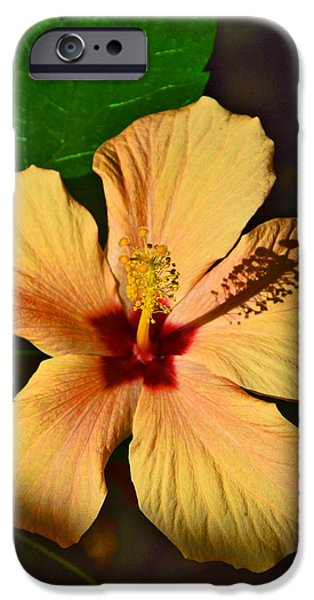 Flower Of Life iPhone Cases - Hibiscus. iPhone Case by Andy Za