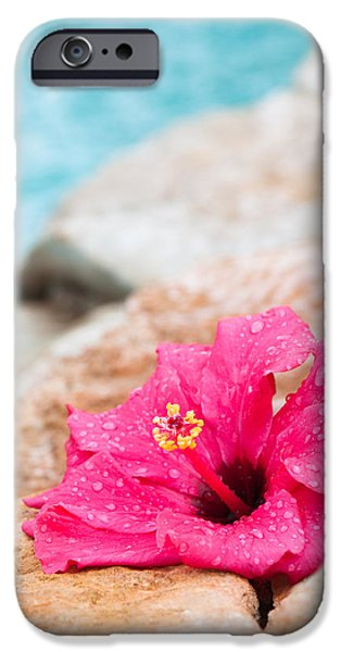 Pollen iPhone Cases - Hibiscus Flower iPhone Case by Amanda And Christopher Elwell