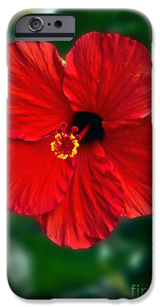 Haybale iPhone Cases - Hibiscus iPhone Case by Robert Bales