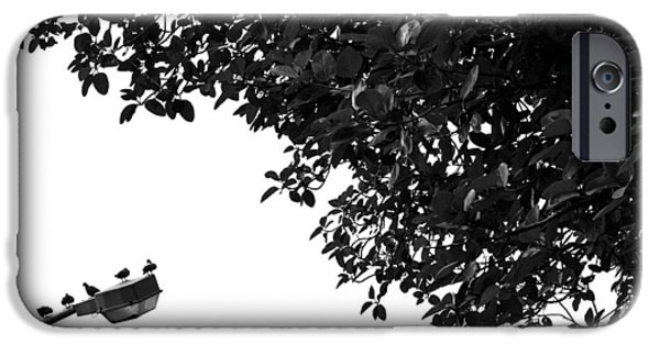 Nature Shot iPhone Cases - High Five iPhone Case by Prakash Ghai