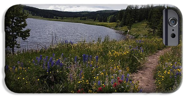 Pines iPhone Cases - Hiking Trail near Dumont Lake Colorado iPhone Case by Dave Dilli