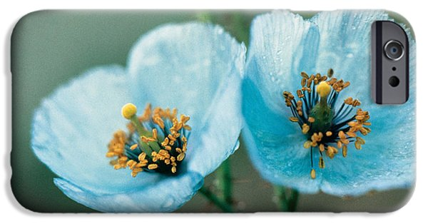 Close iPhone Cases - Himalayan Blue Poppy iPhone Case by American School