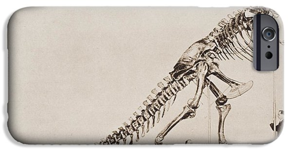 Pen And Ink iPhone Cases - Historical Illustration Of Dinosaur iPhone Case by Ken Welsh