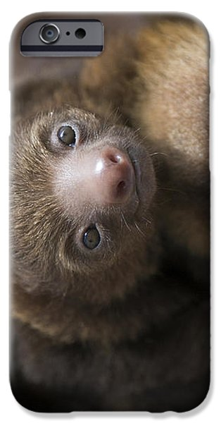Hoffmanns Two-toed Sloth Orphans Hugging iPhone Case by Suzi Eszterhas