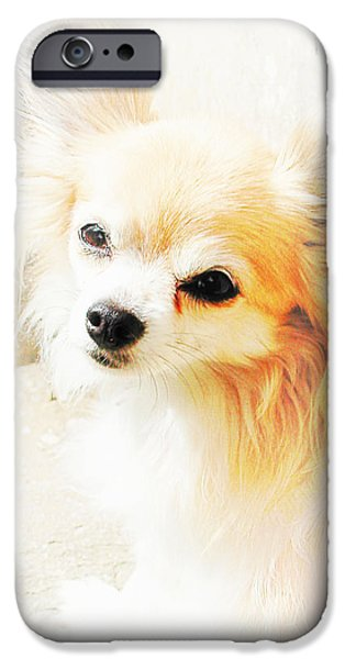 Puppy Digital Art iPhone Cases - Hols iPhone Case by Dorothy Berry-Lound