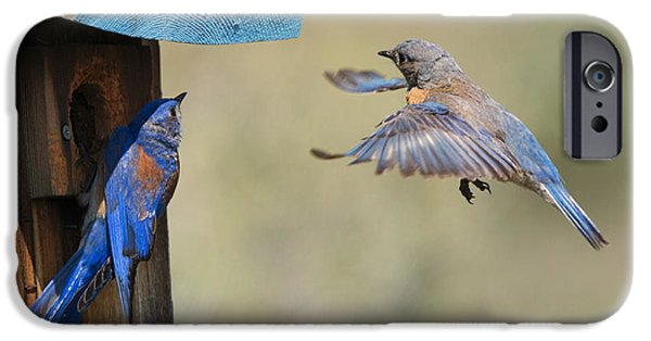 Bluebird iPhone Cases - Home Inspection iPhone Case by Mike Dawson