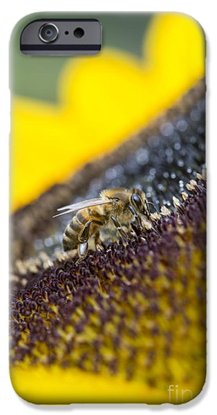 Fauna iPhone Cases - Honey Bee iPhone Case by Tim Gainey