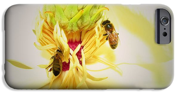 Business Photographs iPhone Cases - Honey Bees And Magnolia iPhone Case by Joyce Dickens