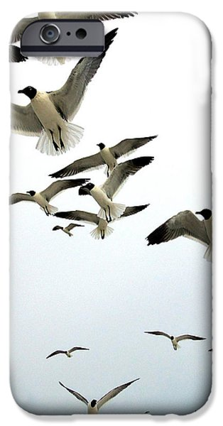 Flying Seagull iPhone Cases - Honeymoon Island Sea Gulls iPhone Case by Chris Mercer