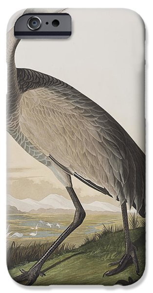 Hoops iPhone Cases - Hooping Crane iPhone Case by John James Audubon