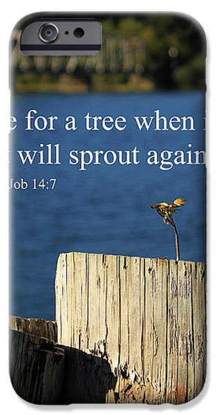 Hope For A Tree iPhone Case by James Eddy