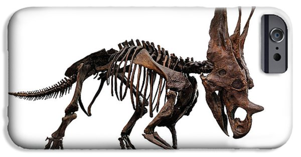 Dinosaur iPhone Cases - Horned Dinosaur Skeleton iPhone Case by Oleksiy Maksymenko
