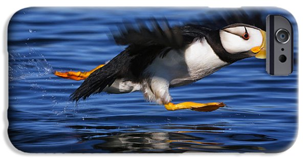 Action iPhone Cases - Horned Puffin  Fratercula Corniculata iPhone Case by Marion Owen