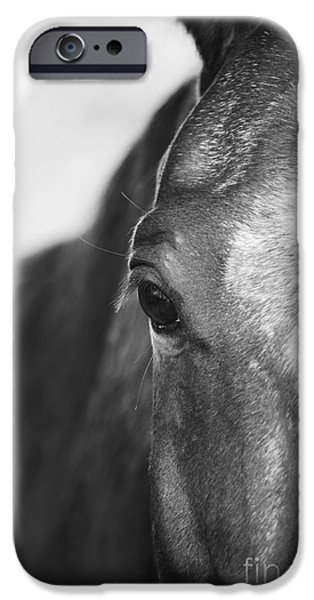 Horse iPhone Cases - Horse Black and White iPhone Case by Tami Finsel