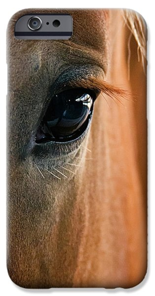 Horse iPhone Cases - Horse Eye iPhone Case by Adam Romanowicz