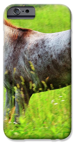 Horse in Pasture Field iPhone Case by Thomas R Fletcher